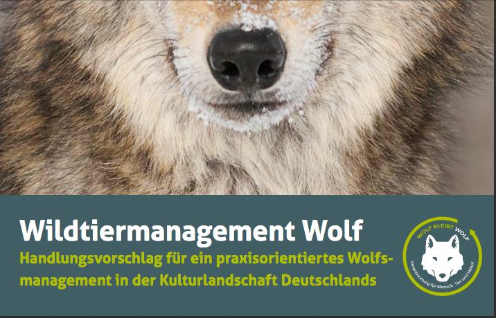 Wildtiermanagement Wolf