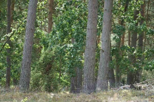 Waldstrategie 2050